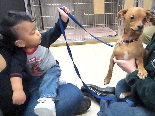 children dogs helping love people pets - 8092070400