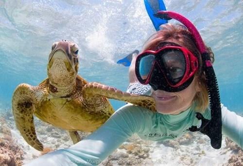 turtles sea life snorkeling - 8092268032