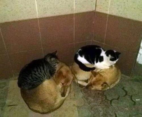 fotos animales gatos perros - 8092276224