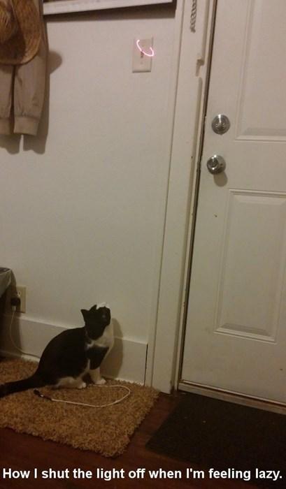 Cats red dot tricks - 8092339712