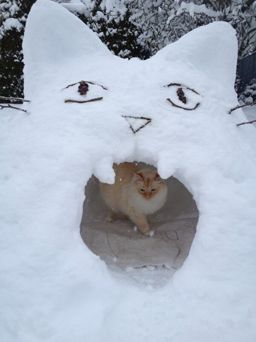 Cats,snow,igloo