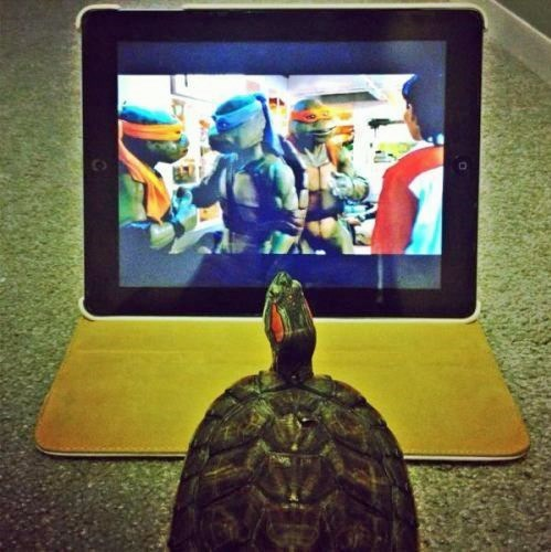 cute turtles teenage mutant ninja turtles - 8092355840