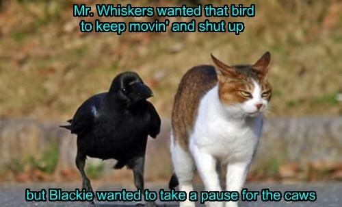 birds puns Cats funny - 8092398592