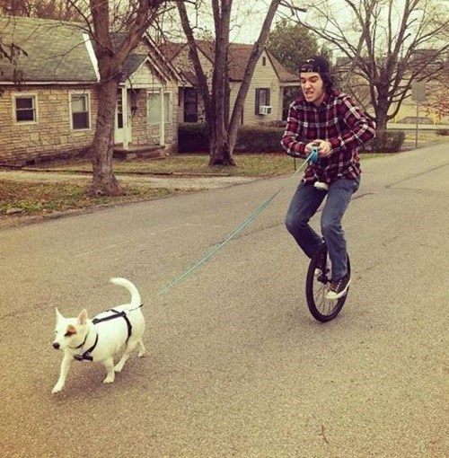 dogs pets unicycle - 8092402688