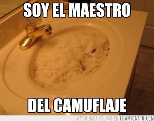 gatos Memes animales - 8093176064