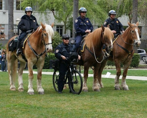 monday thru friday cops work bike horse police - 8093196800