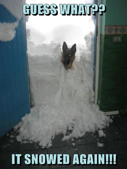obvious dogs snow funny - 8093208832