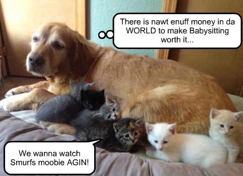 dogs kitten babysit funny - 8093235456