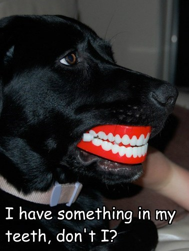 dogs teeth funny - 8093336832