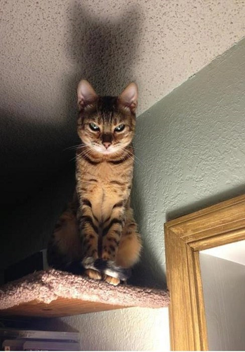 scary angry Cats - 8093380864