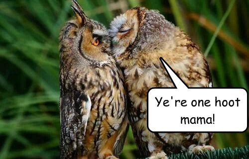 pickup lines KISS puns owls - 8093451008