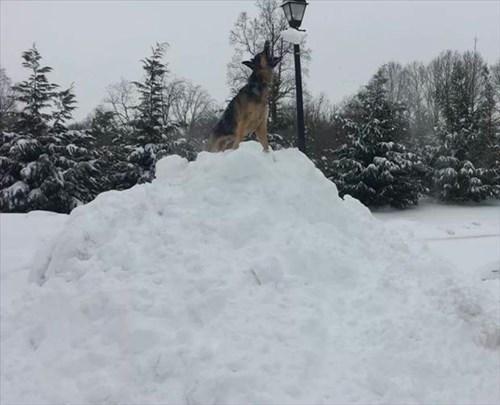 dogs snow winter - 8093491968