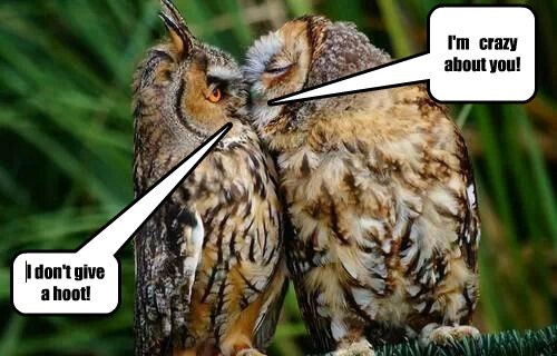 KISS,owls,love,funny