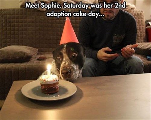 cake,dogs,celebration,rescue