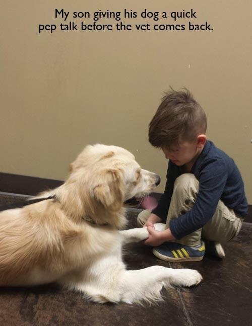 dogs cute Pep Talk vet - 8093524224