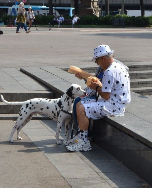 dogs,dalmatian,poorly dressed,matching,spots