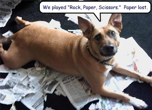 dogs rock paper scissors funny
