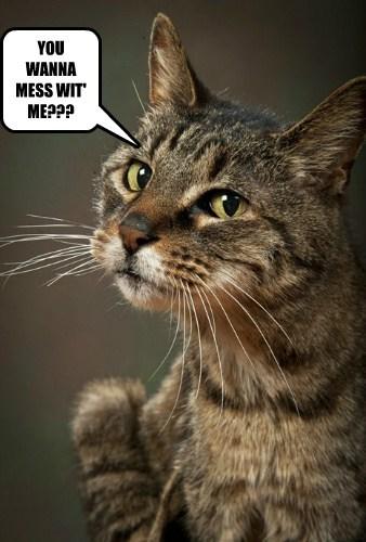 Cats fight tough - 8094225152