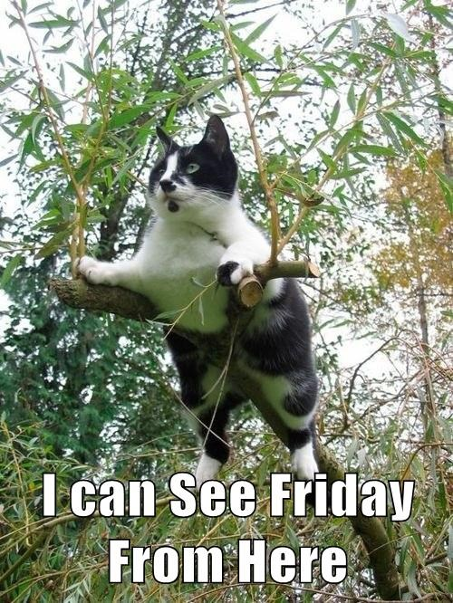 FRIDAY cute Cats funny - 8094404096