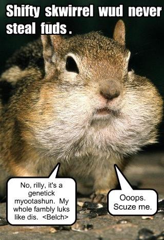 lying squirrels funny - 8094607616