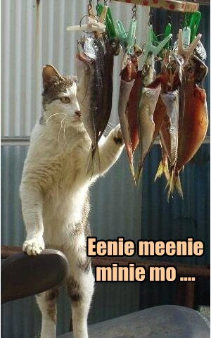 fish Cats funny - 8094736384