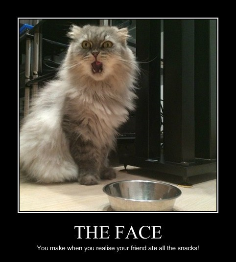 snacks Cats realize funny - 8094757120