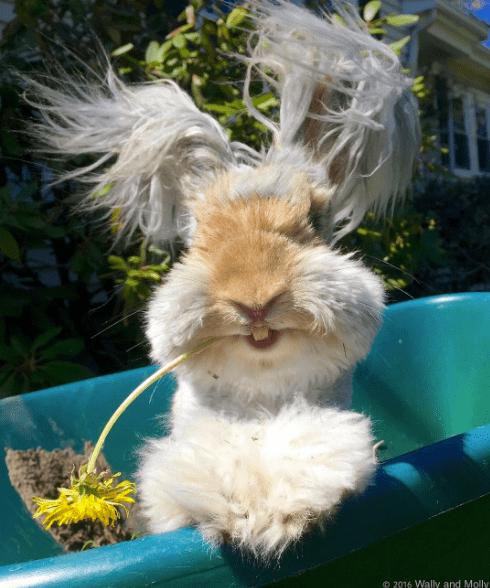 hare rabbit is hairy bunny