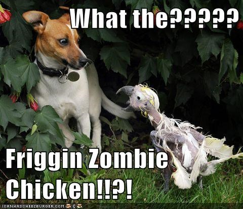 What the????? Friggin Zombie Chicken!!?!
