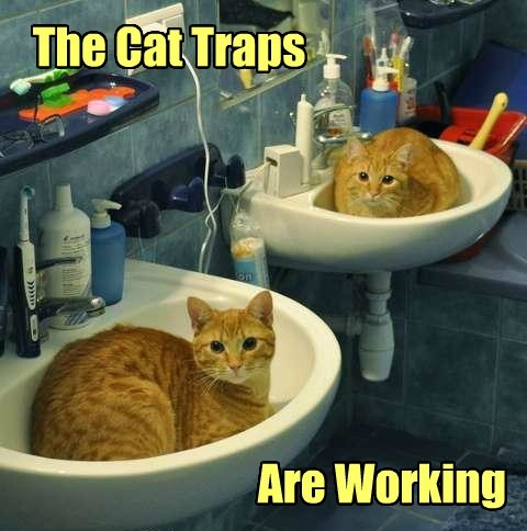 Cats,sinks,funny,ironic