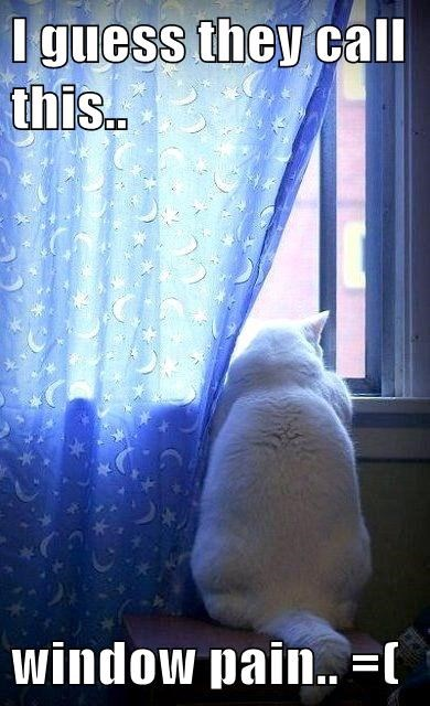 Sad puns Cats funny - 8094891264