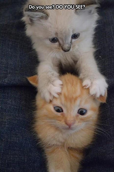 so cute kitten Cats - 8095084288