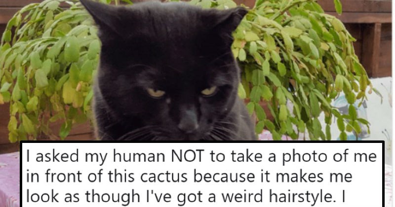 humor twitter humans social media ridiculous Cats funny - 8095493