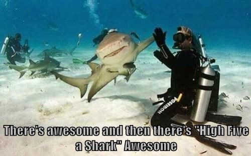 scuba,sharks,high five
