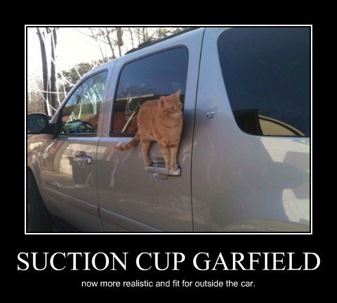 Cats,funny,garfield,suction