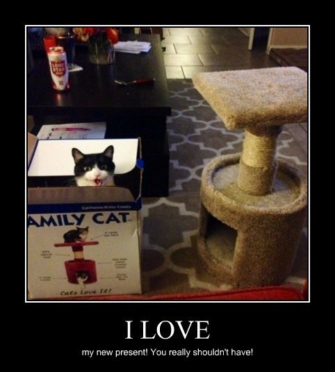 box,Cats,animals,funny