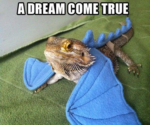 costume dragons funny lizards - 8096359936