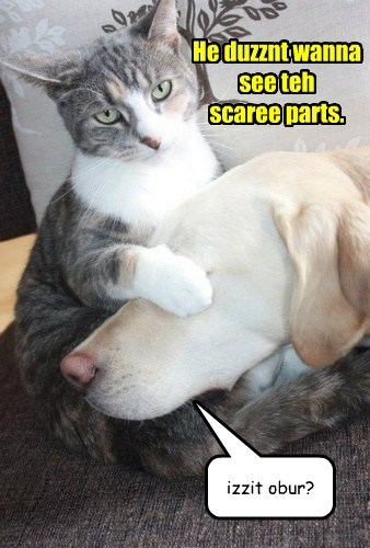 He duzznt wanna see teh scaree parts. izzit obur?
