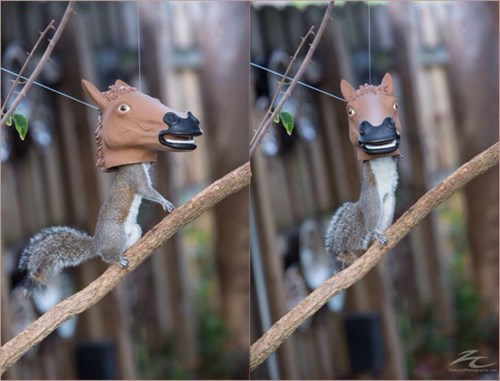 bird feeder,squirrels,horsees