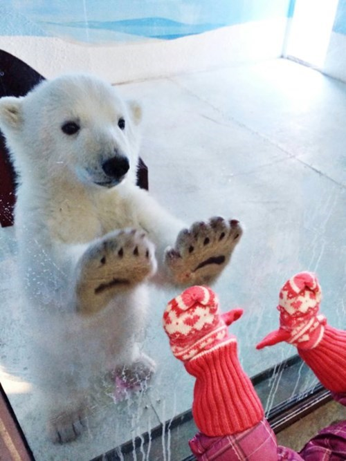 cute,mittens,polar bear