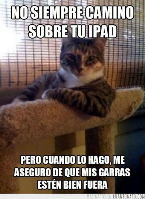 Memes animales gatos - 8096507136