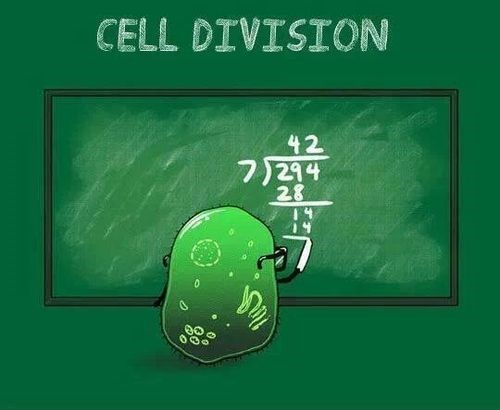 division cells funny science puns math - 8096515328