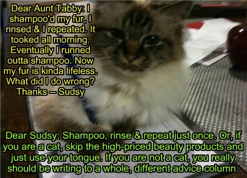 Dear Aunt Tabby: I shampoo'd my fur, I rinsed & I repeated. It tooked all morning. Eventually I runned outta shampoo. Now my fur is kinda lifeless. What did I do wrong? Thanks -- Sudsy Dear Sudsy: Shampoo, rinse & repeat just once. Or, if you are a cat, skip the high-priced beauty products and just use your tongue. If you are not a cat, you really should be writing to a whole, different advice column.