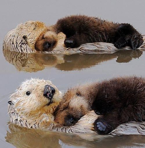 Babies cute snuggle otters - 8097649920