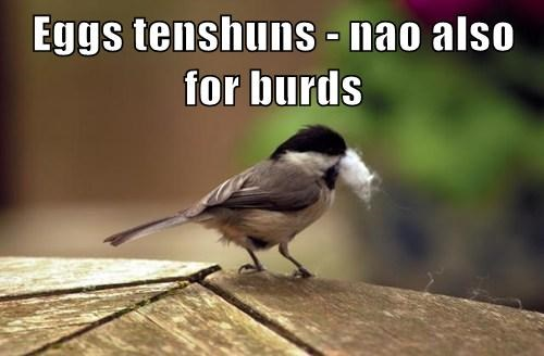 Eggs tenshuns - nao also for burds