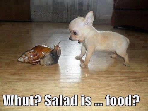 Whut? Salad is ... food?