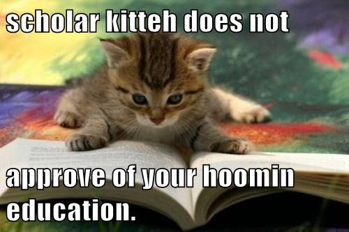 scholar kitteh does not  approve of your hoomin education.