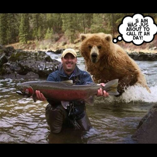 bears fishing salmon yikes