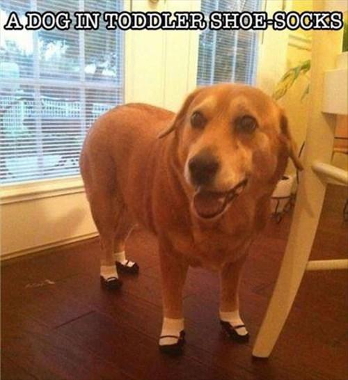 cute dogs shoes weird - 8099878912