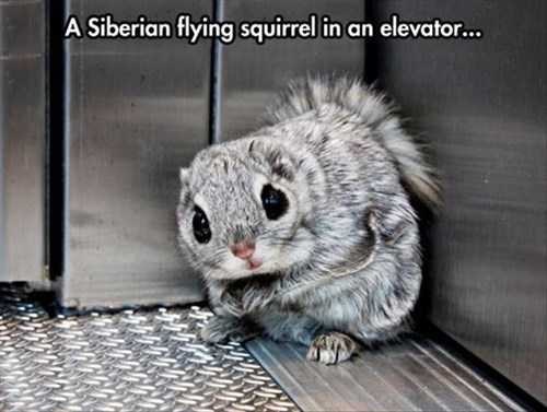 elevator,lazy,funny,flying squirrel