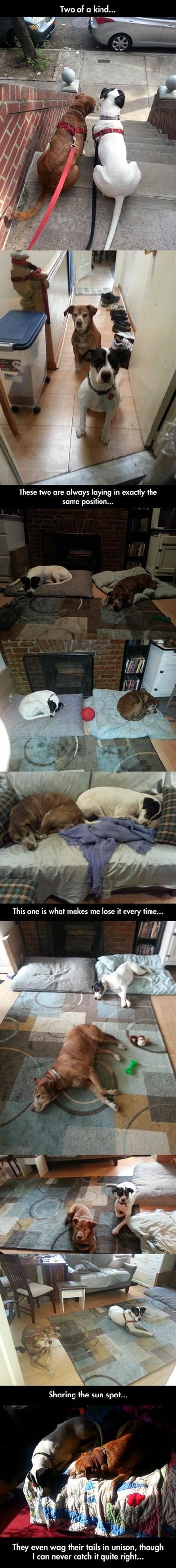 dogs friends sweet